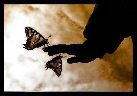 vueloMariposas.jpg